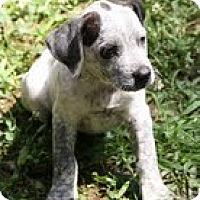 Adopt A Pet :: Frodo - Brattleboro, VT