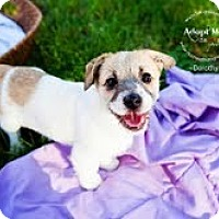 Adopt A Pet :: Dorthy - Shawnee Mission, KS