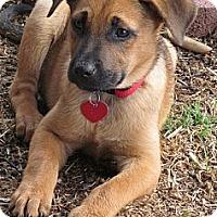 Adopt A Pet :: TARA - Torrance, CA