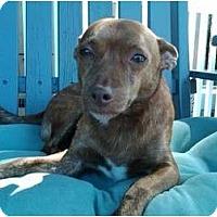 Adopt A Pet :: TRUMAN - Dennis, MA