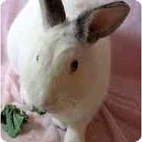 Adopt A Pet :: Jerry - Huntsville, AL