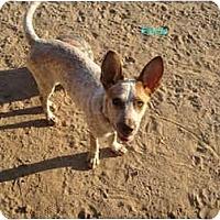 Adopt A Pet :: Panda - Phoenix, AZ