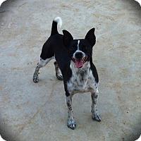 Adopt A Pet :: Bruiser - Fowler, CA