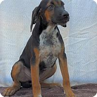 Adopt A Pet :: Lloyd - East Sparta, OH