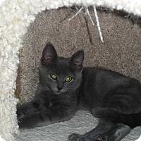 Adopt A Pet :: Boo - Turnersville, NJ
