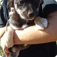 Adopt A Pet :: Gina - Hagerstown, MD