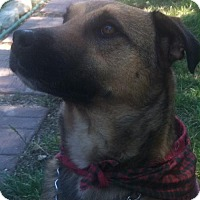 Adopt A Pet :: Luke - Santa Clarita, CA