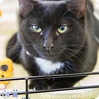 Adopt A Pet :: Yoko - Merrifield, VA