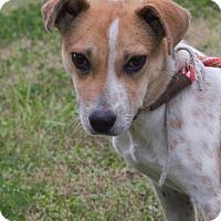 Adopt A Pet :: Gigi - Choudrant, LA