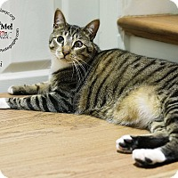 Adopt A Pet :: Kiwi - Friendly Lovebug! - NEW YORK, NY