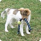 Adopt A Pet :: Kai (Adoption Pending)