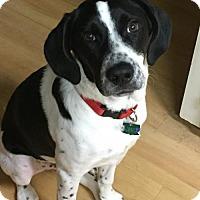 Adopt A Pet :: Zack - Tampa, FL