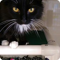 Adopt A Pet :: Miracle - Fort Collins, CO