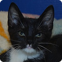 Adopt A Pet :: Holden Clawfield - Cincinnati, OH