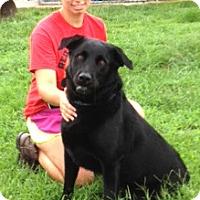 Adopt A Pet :: Jasper - Medora, IN