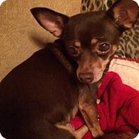 Chihuahua Dog for adoption in Edmond, Oklahoma - Princess