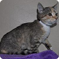 Adopt A Pet :: Aurora - Glendale, AZ