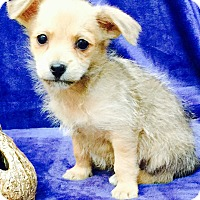 Adopt A Pet :: Milton - Los Angeles, CA