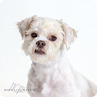 Adopt A Pet :: Tarzan - Naperville, IL
