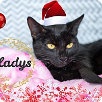 Adopt A Pet :: Gladys - Montclair, CA