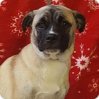 Adopt A Pet :: Nicholas - Oswego, IL