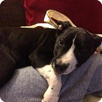 Adopt A Pet :: Smokey - Pleasant Hill, CA
