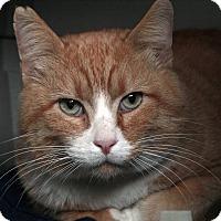 Adopt A Pet :: Gus Gus - St. Louis, MO