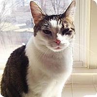 Adopt A Pet :: Annie - Merrifield, VA