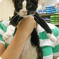Adopt A Pet :: Hulk - Reston, VA