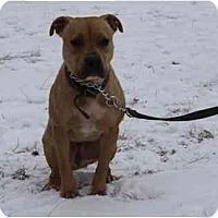 Adopt A Pet :: Chili - Chicago, IL