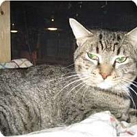 Adopt A Pet :: Godfrey - Portland, ME