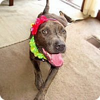 Adopt A Pet :: Mitzi - Chattanooga, TN