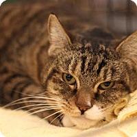 Adopt A Pet :: Holly - Sacramento, CA