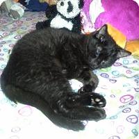Adopt A Pet :: Raven - Fairborn, OH