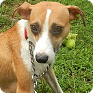 Adopt A Pet :: Maple