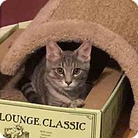 Adopt A Pet :: Aemon - Gaithersburg, MD