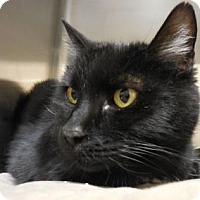 Adopt A Pet :: Baby - Wickenburg, AZ