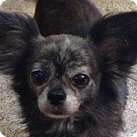 Adopt A Pet :: Stormy - Baton Rouge, LA