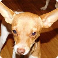Adopt A Pet :: Quinnie - MINNEAPOLIS, KS