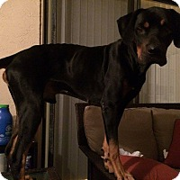 Adopt A Pet :: Shamrock - Windermere, FL
