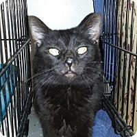 Adopt A Pet :: VELVET - Phoenix, AZ