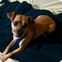 Adopt A Pet :: Jamilla - San Francisco, CA