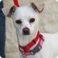 Adopt A Pet :: Mia - Palmdale, CA