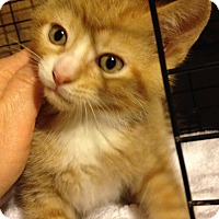 Adopt A Pet :: Chips - Franklin, WV