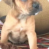 Adopt A Pet :: Kayla - St Petersburg, FL