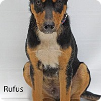 Adopt A Pet :: Rufus - Waterbury, CT