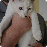 Adopt A Pet :: Augustus - Danbury, CT