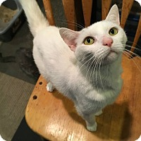 Adopt A Pet :: ANGIE! - Philadelphia, PA