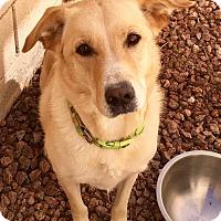 Adopt A Pet :: Leon - Las Vegas, NV