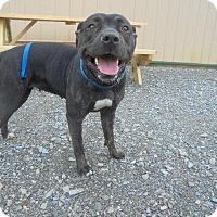 Adopt A Pet :: Minnie - Springfield, TN